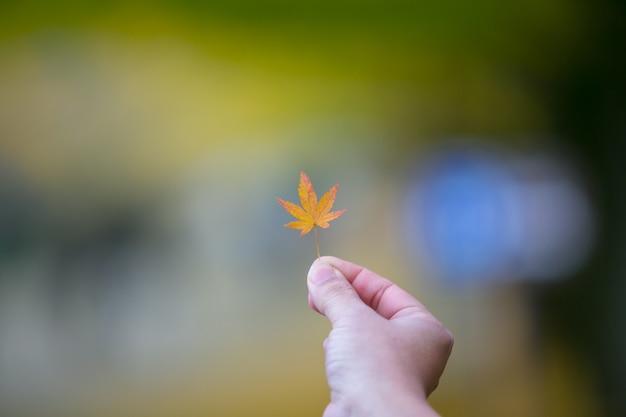 Passi la mostra delle foglie di acero rosse in parco a tokyo, giappone