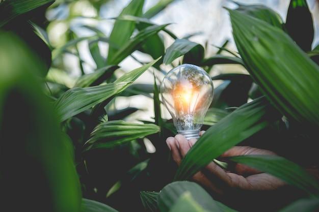 Passi la tenuta della lampadina, delle fonti di energia per energia rinnovabile, naturale e ami il concetto del mondo.