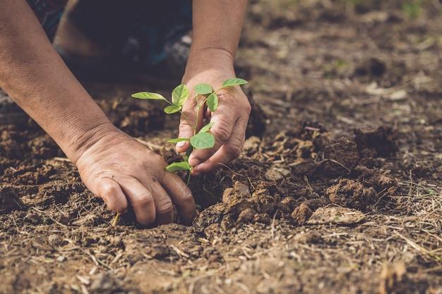 Passi la tenuta e la piantatura del giovane albero di pisello di farfalla nel suolo. salva il concetto di mondo ed ecologia