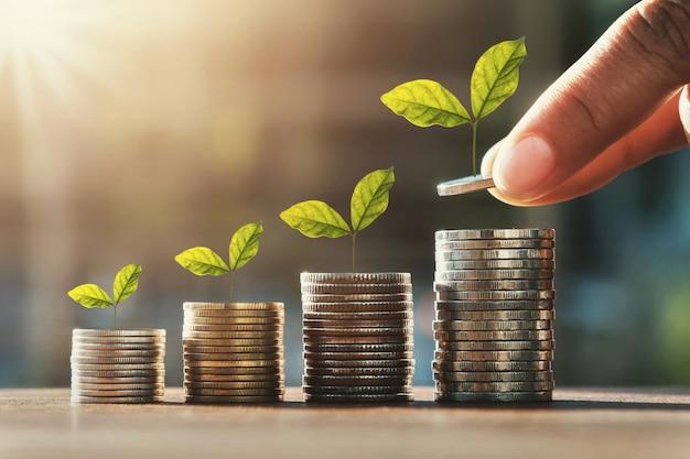 Passi le monete della tenuta per impilare ed il punto della pianta di crescita