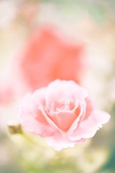 Pastello morbido giardino fiorito rosa vintage