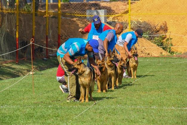 Pastore tedesco con un allenatore, concorso per cani