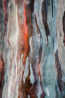 Pattern di sfondo astratto di corteccia di albero colorato eucalyptus deglupta