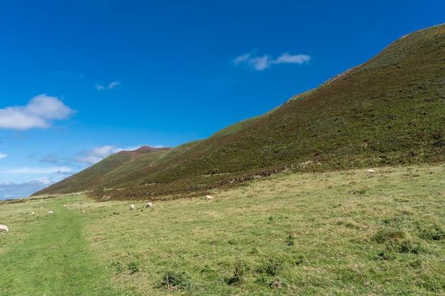 Pecore al pascolo su uno dei campi nell'area naturale