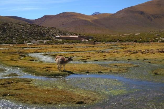 Pecore esplorare