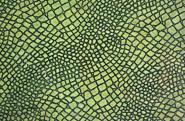 Pelle di serpente verde