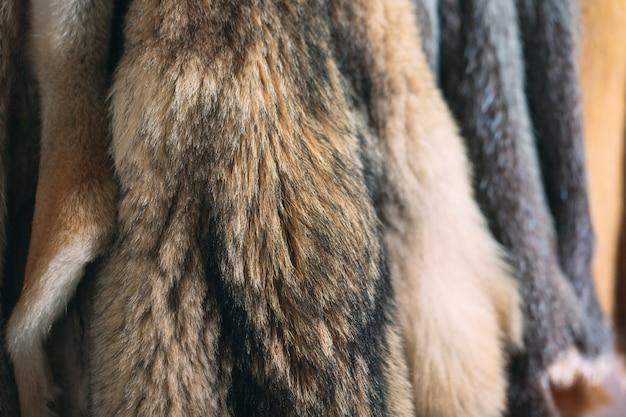 Pelliccia di animali. volpi, procioni, lupi, castori, visoni, nutria appesi dopo l'elaborazione.