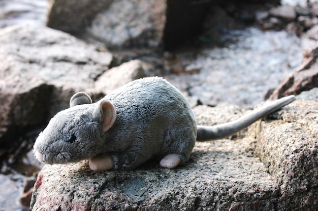 Peluche ratto grigio sulle pietre