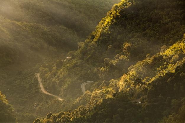 Pendio di montagna boscoso con le conifere sempreverdi avvolte nella nebbia e nei raggi di luce