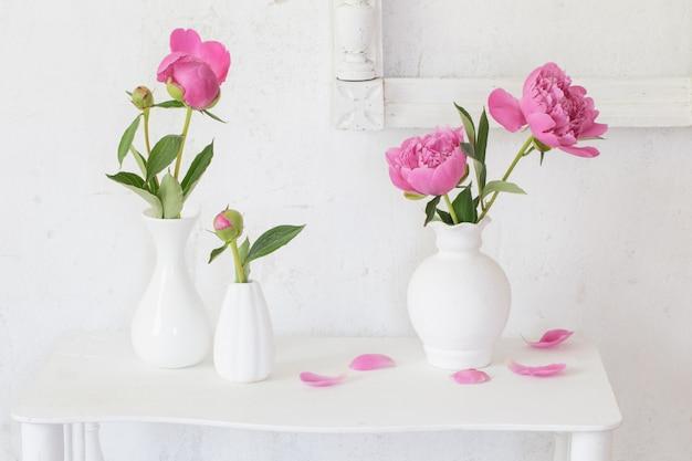 Peonie rosa in vasi su fondo bianco
