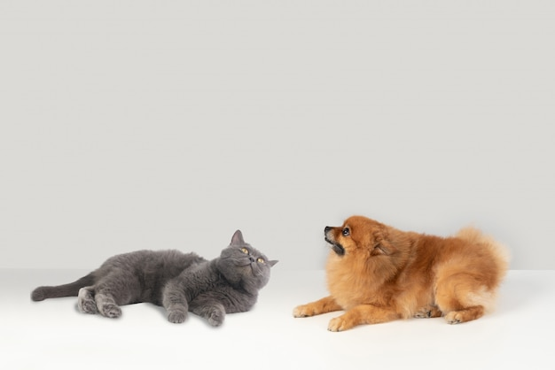 Perché i cani e i gatti non possono volare come uccelli?