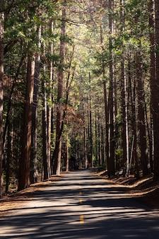 Percorsi attraverso il parco nazionale di yosemite in california