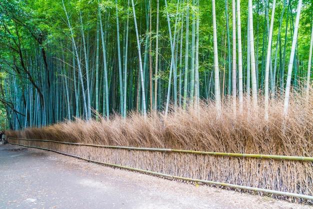 Percorso alla foresta di bambù a arashiyama a kyoto.