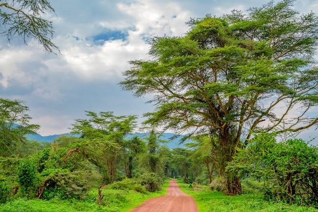 Percorso attraverso la foresta con alberi verdi