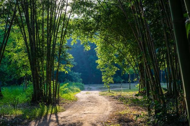 Percorso del passaggio pedonale con alberi di bambù nella foresta