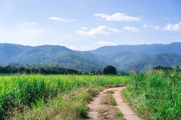 Percorso del vicolo del passaggio pedonale con la montagna e il campo verde