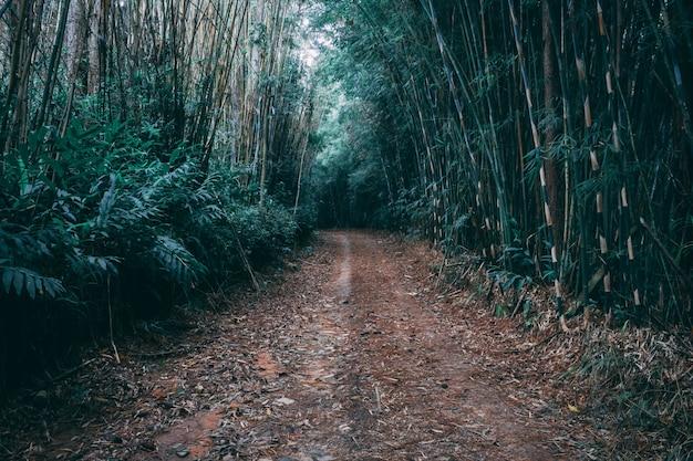 Percorso di bambù