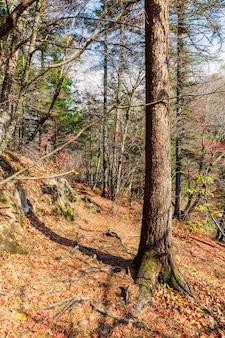 Percorso di escursione nella bella foresta di autunno in russia