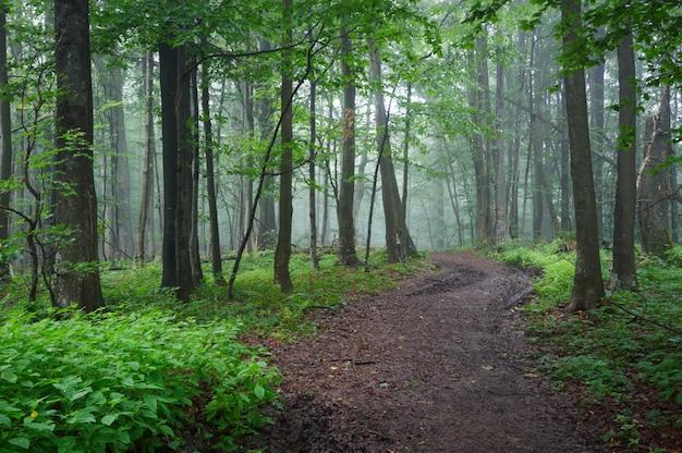 Percorso di strada sterrata attraverso la foresta