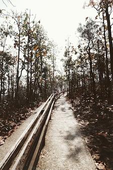 Percorso giardino percorso diurno alberi zone collinari