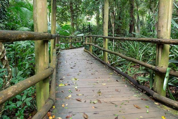 Percorso in legno attraverso la foresta pluviale in brasile