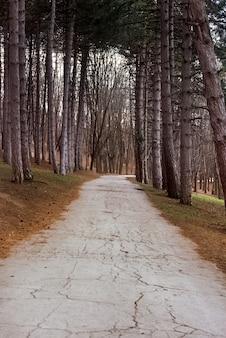 Percorso in una foresta di fine inverno