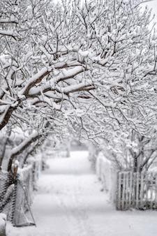 Percorso innevato e alberi nella neve