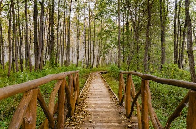 Percorso nella foresta d'autunno.