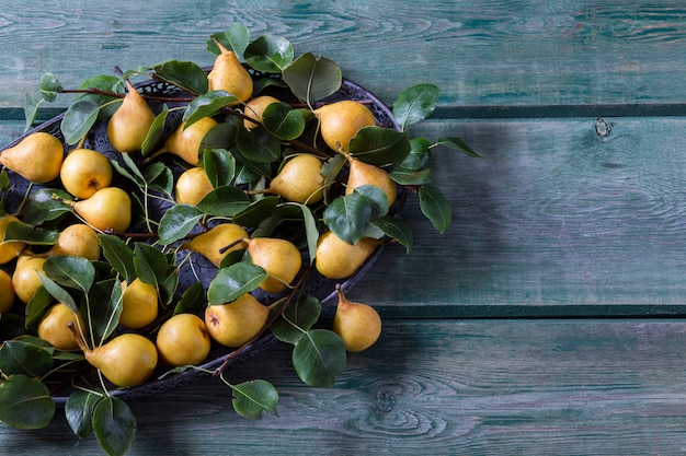 Pere gialle mature in un vecchio vaso e rami di pera