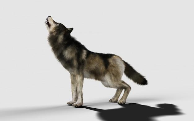 Pericolo lupo animale