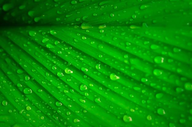 Permesso verde con le gocce di rugiada carta da parati fresca della natura della molla