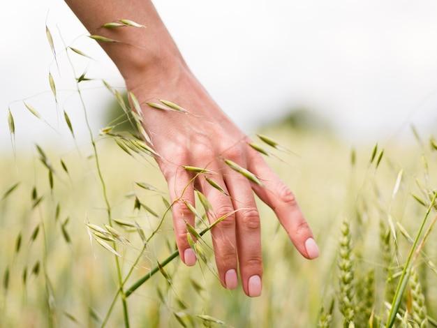 Persona che tocca il grano con il suo primo piano a mano