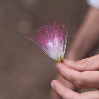 Persona in possesso di un fiore tropicale, finca el cisne, honduras