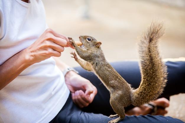 Persone che danno una nocciolina a uno scoiattolo di albero