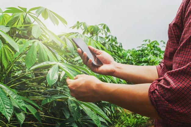 Persone che utilizzano il rapporto di controllo mobile dell'agricoltura nella fattoria di manioca
