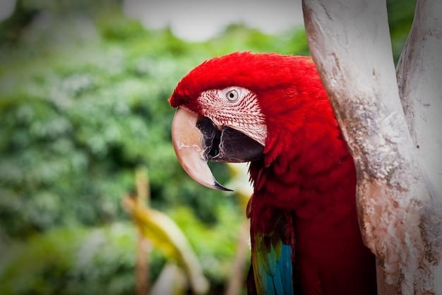 Perù lima america latina