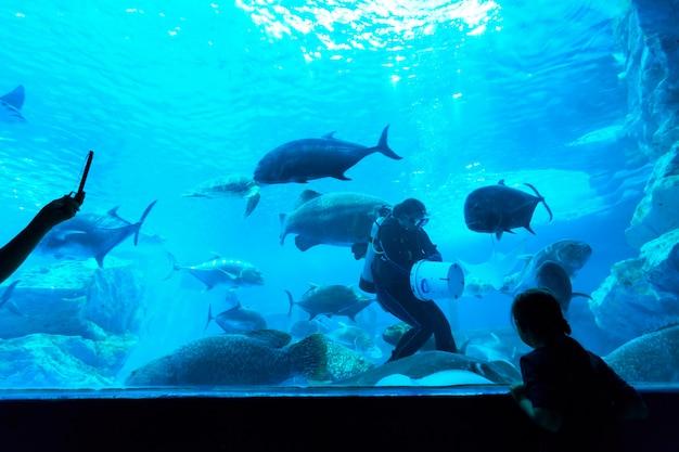 Pescare in acquario
