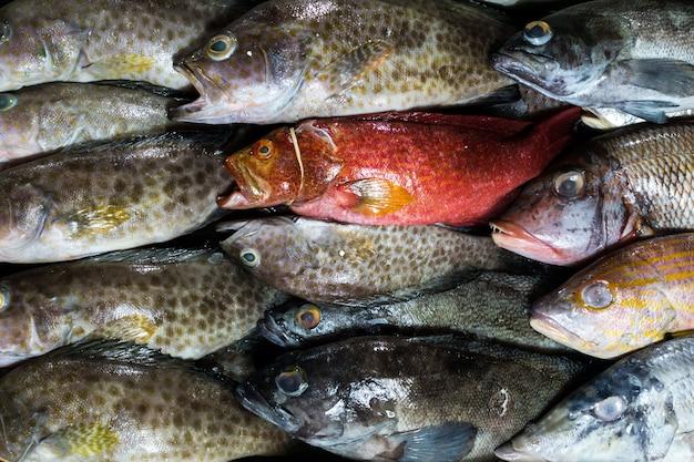 Pescare in un mercato del pesce