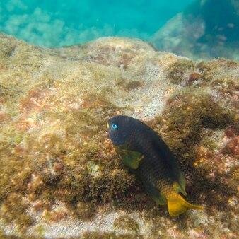Pescare su una roccia sott'acqua, puerto egas, santiago island, isole galapagos, ecuador