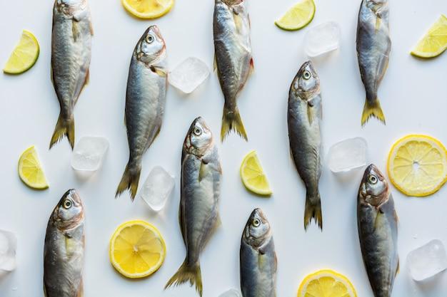 Pesce azzurro su bianco, modello di pesce,