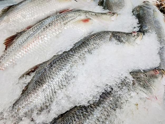 Pesce branzino fresco sulla vendita di ghiaccio nel mercato.