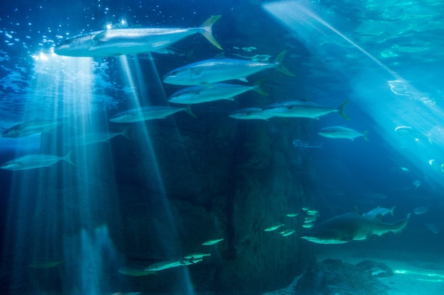 Pesce che nuota con lo squalo nell'acqua più scura