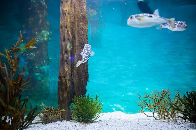 Pesce che nuota in un carro armato