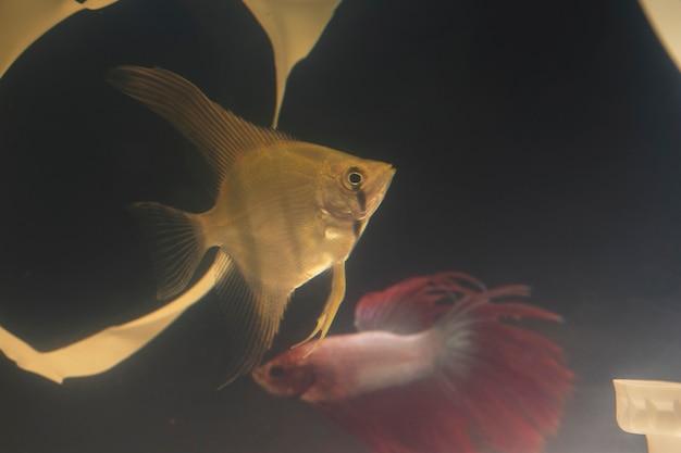Pesce che nuota in un serbatoio sporco