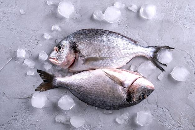 Pesce crudo crudo intero dell'orata sui cubetti di ghiaccio su un fondo grigio vista superiore con lo spazio della copia.