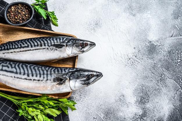 Pesce crudo dello sgombro con prezzemolo e pepe. frutti di mare freschi sfondo grigio. vista dall'alto. spazio per il testo