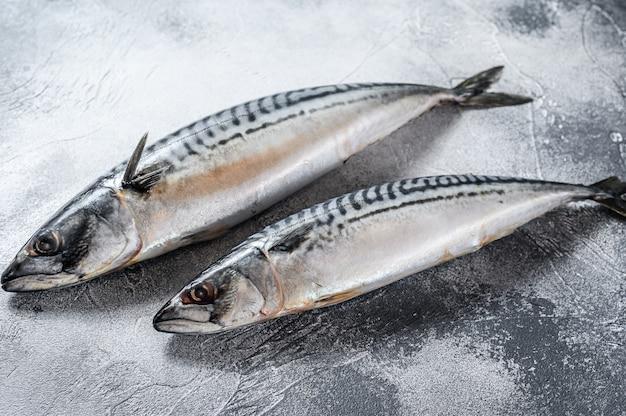 Pesce crudo di sgombro. frutti di mare freschi sfondo grigio. vista dall'alto