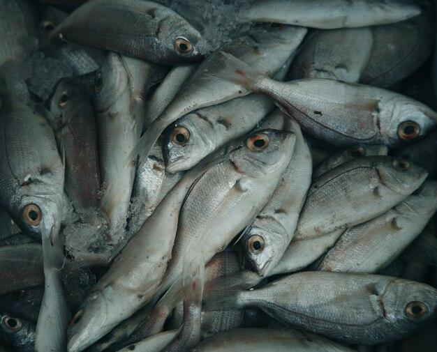 Pesce crudo fresco nel mercato