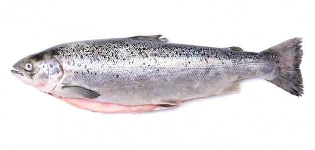 Pesce di color salmone su bianco isolato