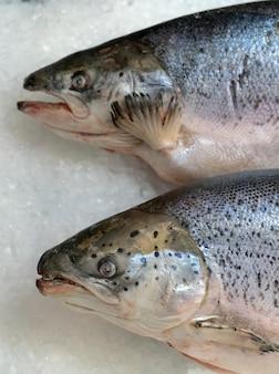 Pesce di salmone congelato